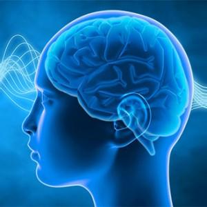 The Brain Hub
